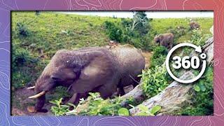 Elephants in 360 4K - Bird's Eye View (Wildlife and Nature 2018)