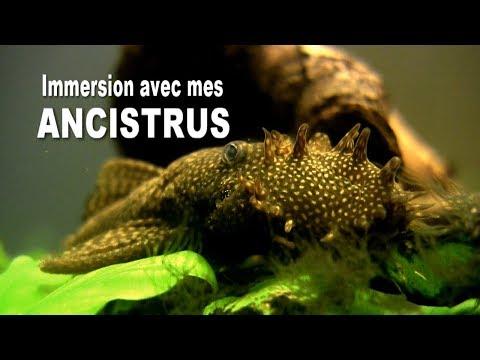 Pinworm gyertyák ellen