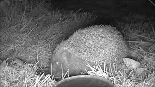 Wildlife Trail Camera - 20.4.2019