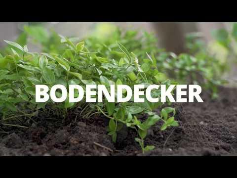 BODENDECKER