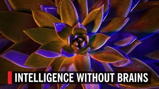 Intelligence Without Brains تحميل MP3