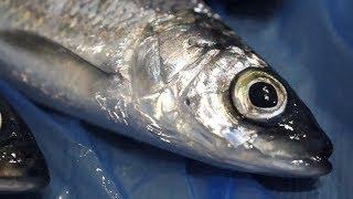 Что такое ловля рыбы на подсветку