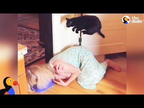 Cat Is Pretty Sure Kitchen Floor Is LAVA | The Dodo
