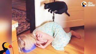 Смотреть онлайн Кот всегда перепрыгивает преграды, что бы там ни было