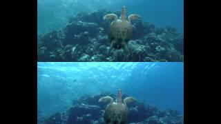 подводный мир в 3д