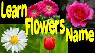 Learn Flowers Name And Image For Nursery Learn English Flower Names Different Types Of Flowers