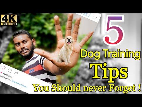 5 Dog Training Tips & Secrets in 5 Minutes (Hindi) 4K    Smart Dog Training