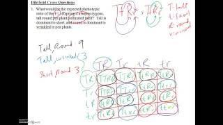Monohybrid And Dihybrid Crosses Solved