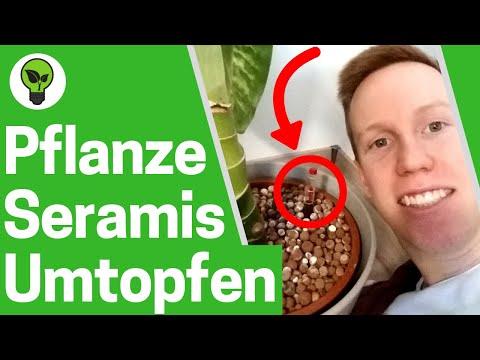 Die Volksmittel gegen die Würmer bei den erwachsenen Krümmungen