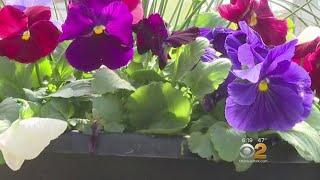 Garden Tips Urge Wait On Planting Until After Last Killing Frost