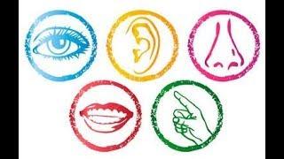 Vídeo - Mindful Eating: 8 tipos de fome - CBME