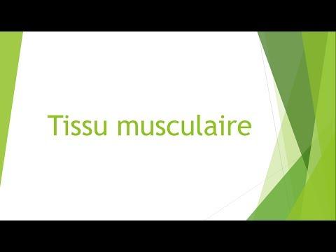 De quoi fait mal les muscles oblique du ventre