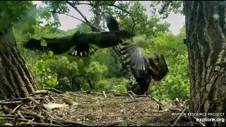 Decorah Eagles~The Forgotten Fish-Nice Fly In-Rumble to Claim The Fish_6.28.20
