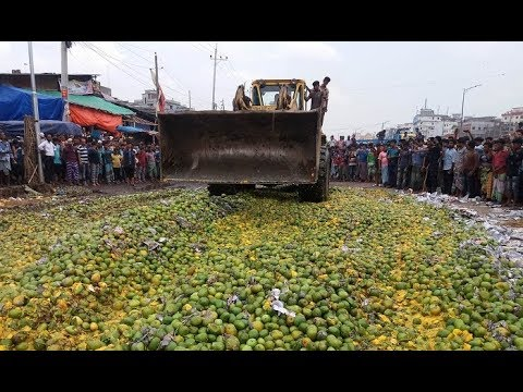 A RAB team on Thursday, May 17, seized and destroyed about 1000 maunds of chemically ripened mangoes at Jatrabari wholesale market.