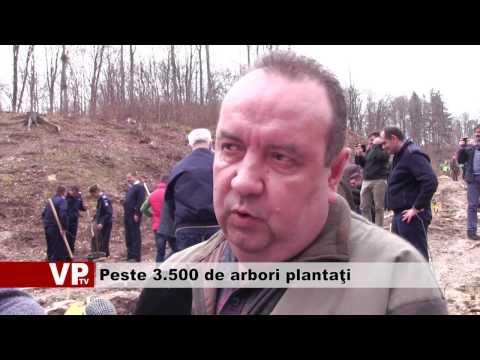 Peste 3.500 de arbori plantaţi