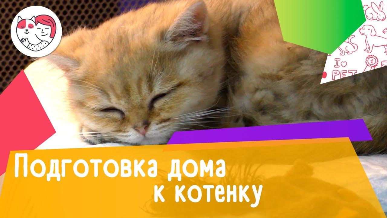 Как подготовить дом к появлению котенка: 4 совета