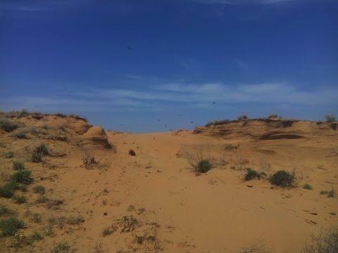 Ласточкины гнёзда в пустыне