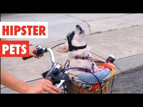 Hipster Pets   Funny Pet Video Compilation 2017