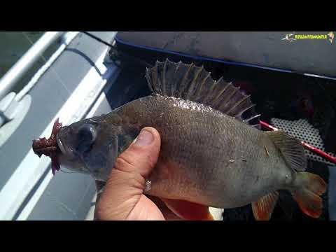 Рыбалка на  спиннинг! Как снять без камеры ,щука ,окунь, на что я ловил, Отчет о рыбалке!