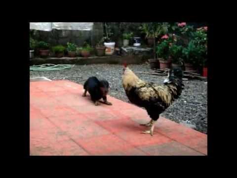 Chathan    disturbance unbelievable - смотреть онлайн на Hah Life