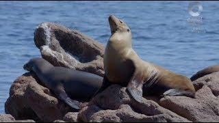 Islas de México - Isla Espíritu Santo