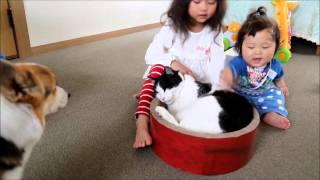赤ちゃんに叩かれても耐えている猫とそれを止める5歳児と怖がっているワンコ