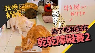 Cat's obstacle race|LAMUNCATS ♧