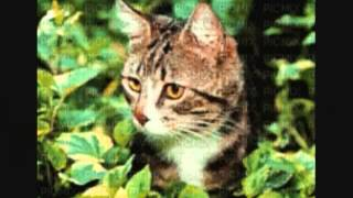 30min kołysanki dla dzieci piosenki kotki dwa miś coś ty kotku miał