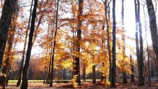Спокойная музыка без слов Golden autumn