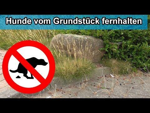 Hunde vom Grundstück / Rasen / Blumenbeet fernhalten - Hausmittel gegen Hunde - Fernhaltemittel