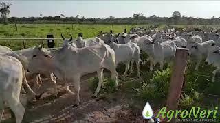 Irrigação de pastagem – Agroneri