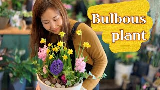 구근식물 수선화, 히아신스 모아심기, Bulbous Plants, 가장 먼저 봄을 알리는 알뿌리식물