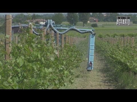Vite in Campo 2018: macchine e attrezzature per Ia viticoltura sostenibile
