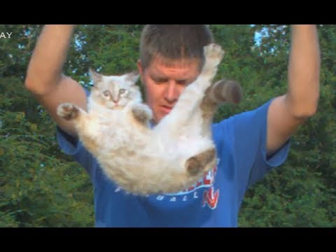 Slow Motion Flipping Cat Physics | Smarter Every Day 58