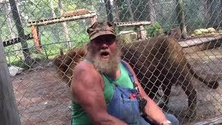 animale leul urineaza pe oameni