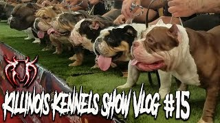 AMERICAN BULLY/EXOTIC BULLY DOG SHOW!!!!! KILLINOIS KENNELS SHOW VLOG#15 IBKC