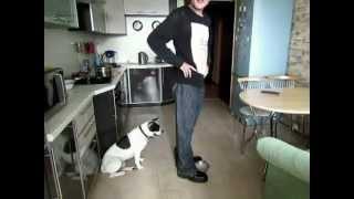 Смотреть онлайн Как избавится от агрессии собаки во время еды