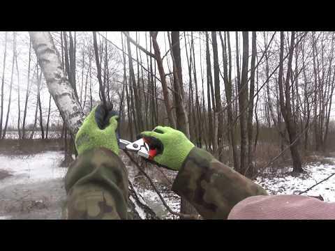Miniatura filmu Youtube - Cięcie śliwy Renklody