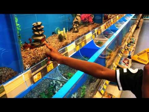 Pet fish shopping