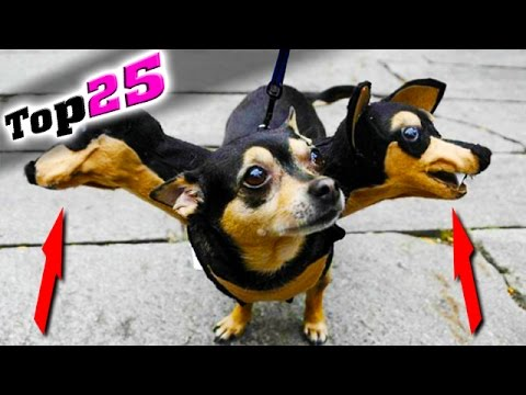Die 25 LUSTIGSTEN Tier-Kostüme die es gibt! 😹