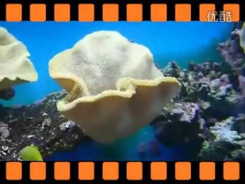 珊瑚颂 伴奏1