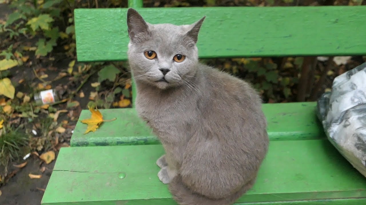 Gray cat lives on a bench as always