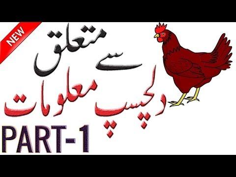 Benefits of Chicken | Information About Hen Bird | Facts About Chicken | Hidden Secrets | Hen Bird