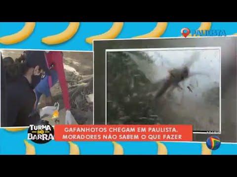 Grande quantidade de gafanhotos assusta moradores em Paulista-PE