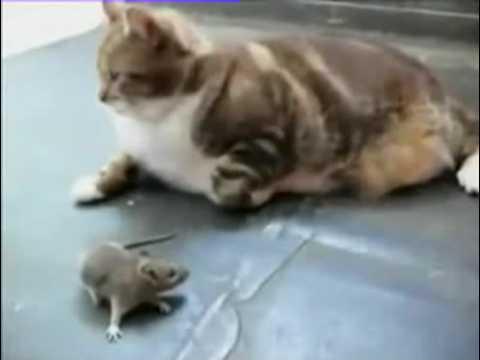 죽은척-하던-쥐의-반격-다시보기