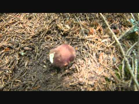 Come trattare un fungo sotto ununghia lunghia fortemente fa male