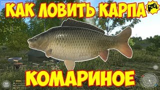 Russian fishing 1. 6 где и на что ловить карпа