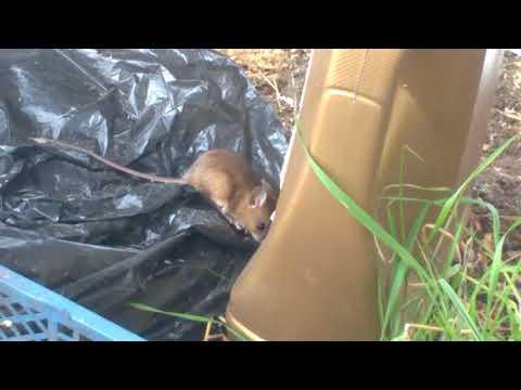 Ультрозвуковой Отпугиватель мышей отзыв