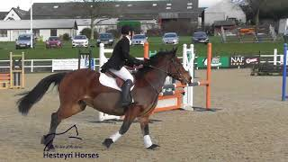 Show Jumping ~ Flicker | Inca | Shirley ~ David Broome Event Centre