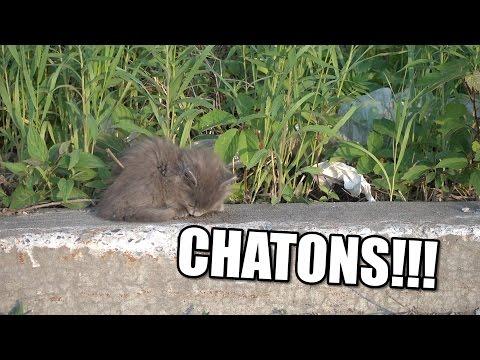 Les suspensions pour les chatons des helminthes